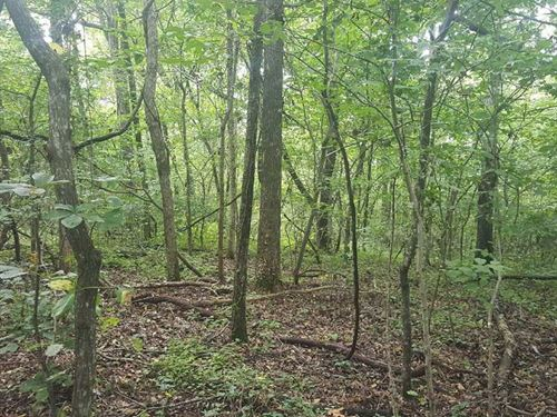 10 Acres With Public Land Acce : Harriet : Searcy County : Arkansas