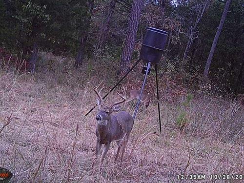 New Wildlife Pics Added, 163.6 : Mountain Home : Baxter County : Arkansas
