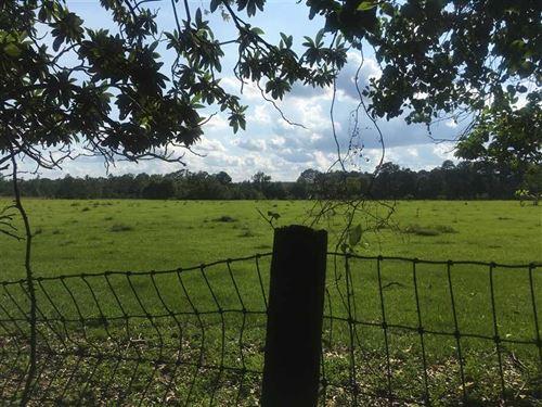 Pierce Farm, Beauregard Parish, 16 : Longville : Beauregard Parish : Louisiana