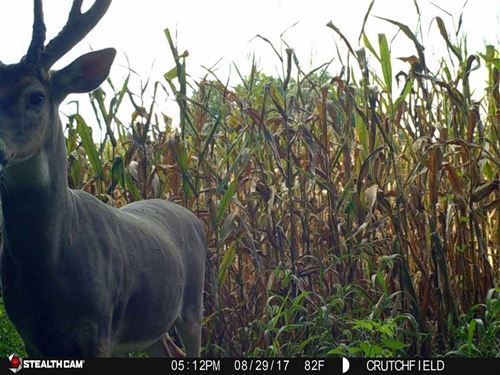 New Trail Camera Pictures In : Yates Center : Woodson County : Kansas