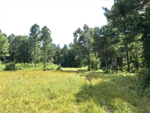 70 Acre Timber And Recreational : Ola : Yell County : Arkansas
