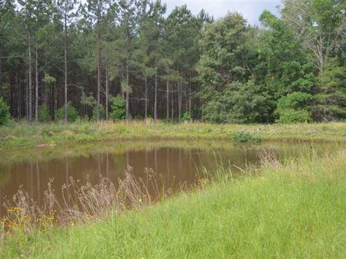 Willow Oak Tree Farm : Anadarko : Rusk County : Texas