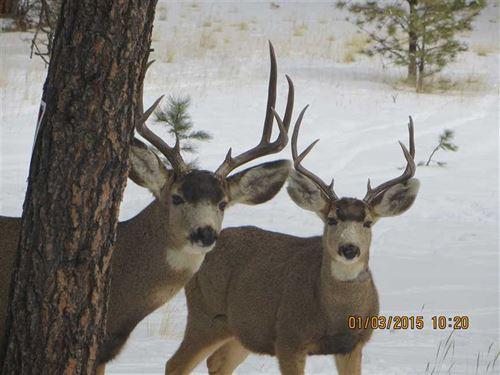 Doe Valley : Guffey : Park County : Colorado
