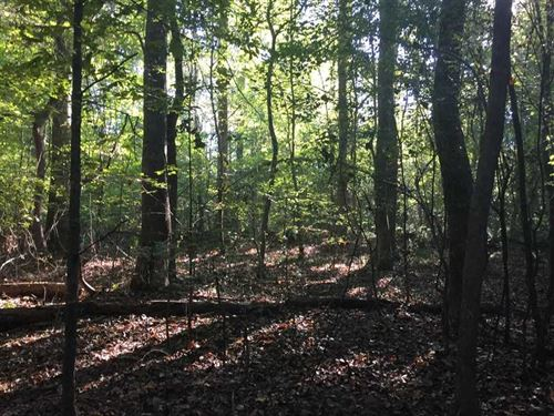 Just Reduced - 112 Acres of Hu : Philadelphia : Neshoba County : Mississippi