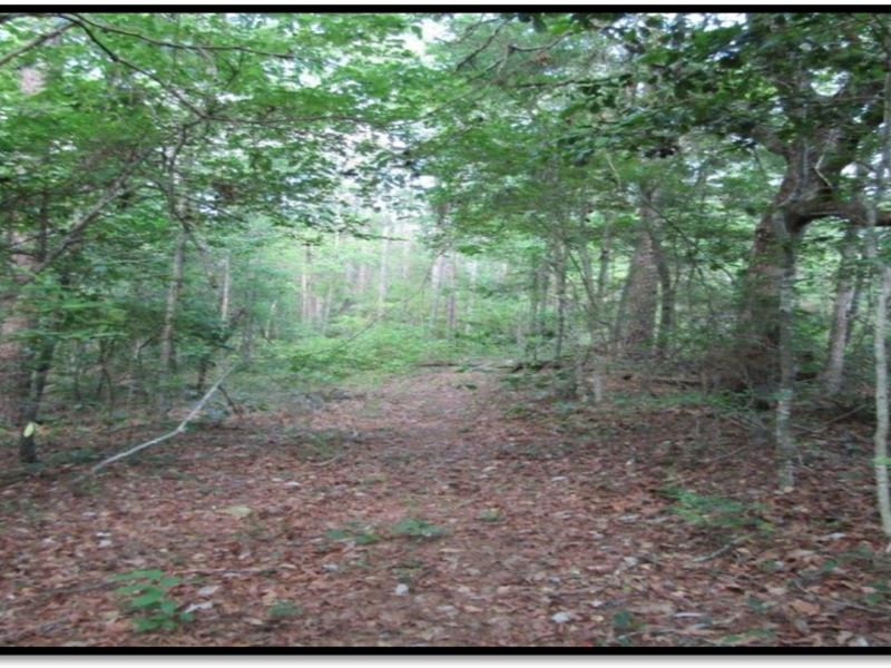 60 acres in lamar county ranch for sale sumrall for Ranches for sale in mississippi
