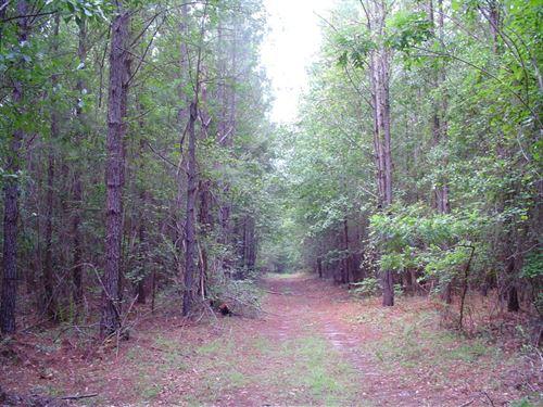 Thompson Paradise 1 Tract : Walterboro : Colleton County : South Carolina