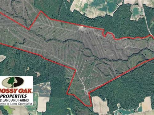 506 Acres of Hunting Land For Sale : Green Sea : Horry County : South Carolina