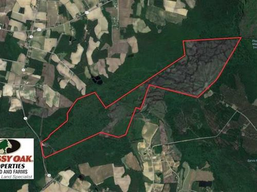505 Acres of Hunting Land For Sale : Green Sea : Horry County : South Carolina