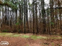 20 Wheeler Wooded Lot : Hernando : Desoto County : Mississippi