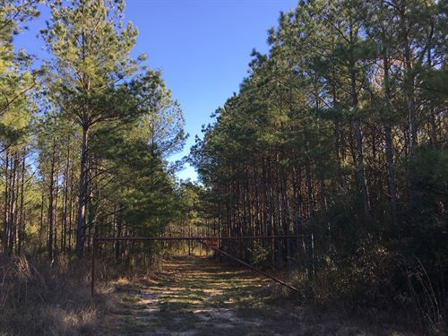 143 Acres Bold Springs Tract 1 & 2 : Livingston : Polk County : Texas