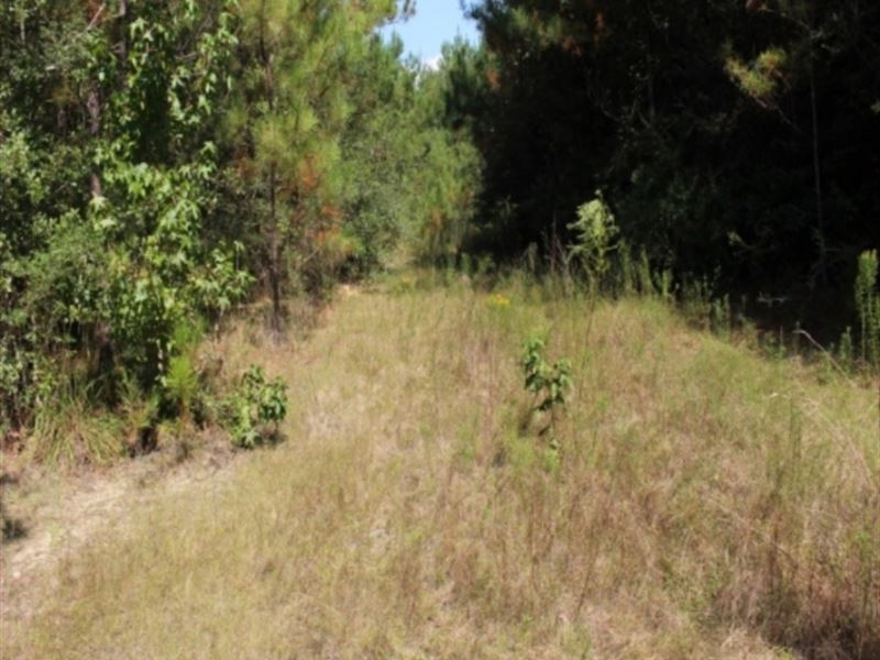 80 Acres In Greene County Ms Ranch For Sale