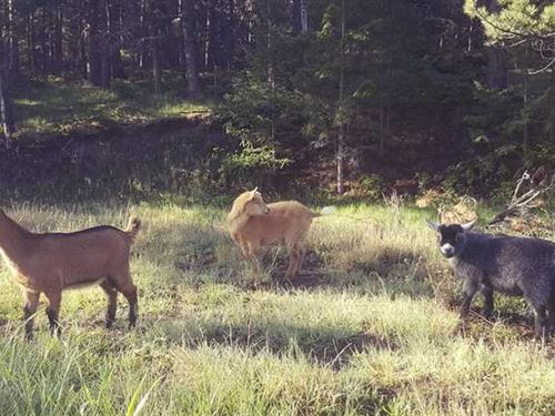Rainbow Valley Ranch : Canon City : Fremont County : Colorado