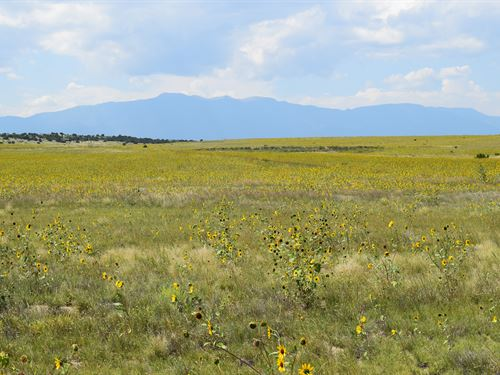 Gorgeous Views - Horse Welcome : Colorado City : Pueblo County : Colorado