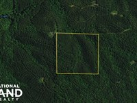 Bluff Springs Timber And Hunting Tr : Cragford : Clay County : Alabama