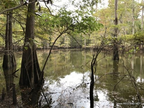 109.7 Ac - Recreational Tract With : Jasper : Texas