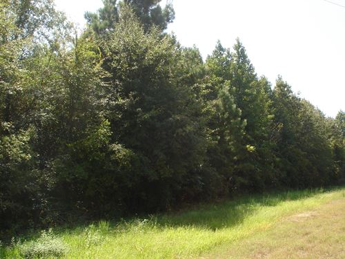 Commercial Pine Timber Farm Land : Clarksville : Red River County : Texas