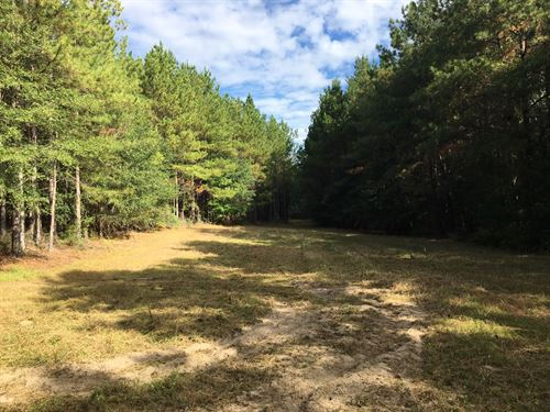Beautiful 40 Ac With A Creek : Troy : Pike County : Alabama