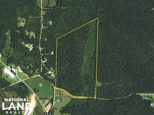 County Road 446 Timber And Hunting : Woodland : Randolph County : Alabama