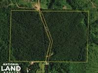 County Road 461 Timber And Recreati : Woodland : Randolph County : Alabama