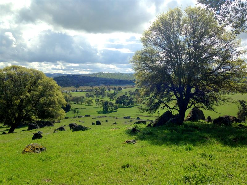 Beautiful Land In Wine Country, Ca : Plymouth : Amador County : California