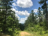 393 +- Ac Timber & Recreation Tract : Gaylesville : Cherokee County : Alabama