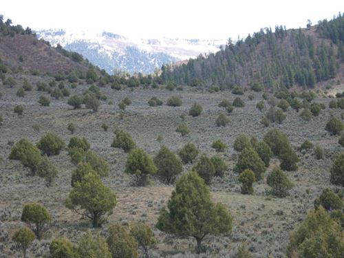 Pinon Hills Ranch Lot 34 : Pagosa Springs : Archuleta County : Colorado