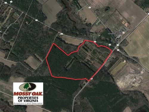 103 Acres of Hunting And Timber La : Melfa : Accomack County : Virginia