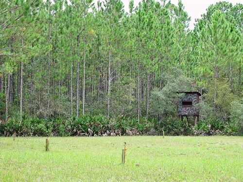 Levy Hunt And Cabin And 235 Acres : Cedar Key : Levy County : Florida