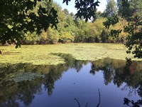 12.89 Ac With Small Pond-Reduced : Lizella : Bibb County : Georgia