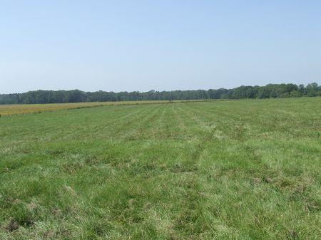 Hagerman Ranch 2000 Acres : Aliceville : Sumter County : Alabama