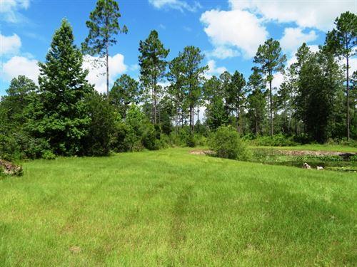 Seaboard Timberlands 254 : Lamont : Jefferson County : Florida