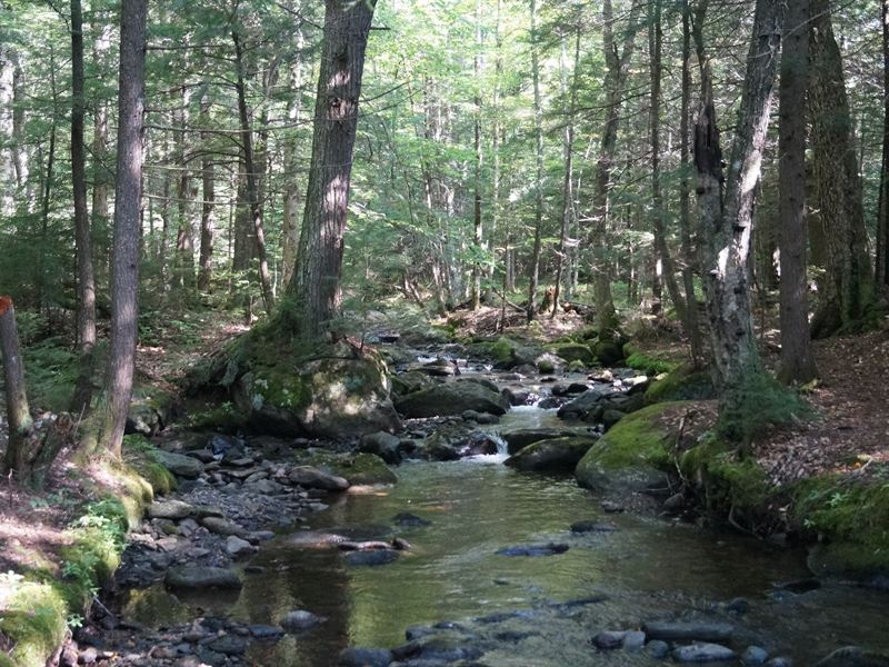 Twin Brooks Woodland : Middlesex : Washington County : Vermont
