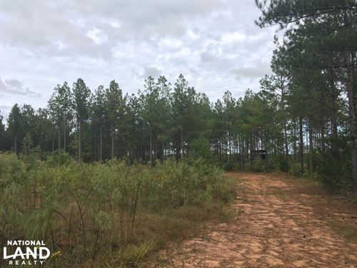 Secluded Hunting Getaway : Crawfordville : Taliaferro County : Georgia
