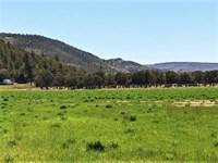 Mountain Acreage With Water : South Fork : Rio Grande County : Colorado