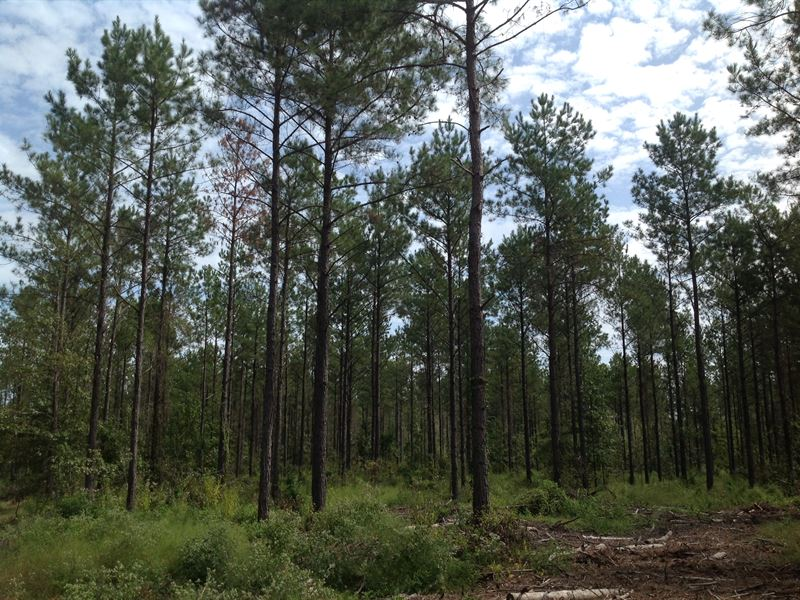 80 Acres Hunting & Timberland : Tyler : Dallas County : Alabama