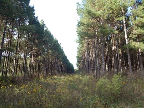43 Acres- Timber & Hunting : Sandy Hook : Walthall County : Mississippi