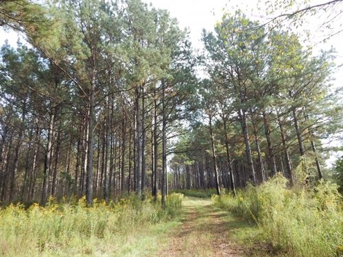 70 Acres -Timber & Hunting : Sandy Hook : Walthall County : Mississippi