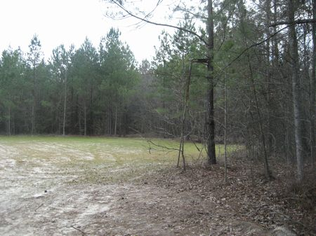 102 Acres Hunting Property : Jeffersonville : Twiggs County : Georgia