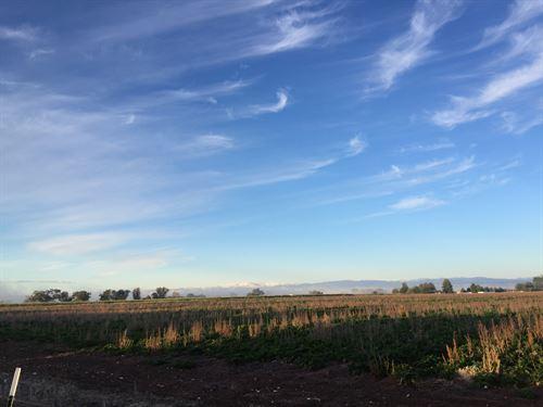 Fremont Sheep Farm : Riverton : Fremont County : Wyoming