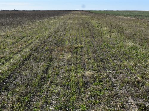 Perkins County Farm : Venango : Perkins County : Nebraska
