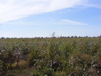 Large Acreage Row Crop Far For Sale : Wolfe City : Hunt County : Texas