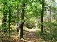Unique Large Timberland Tract : Eleanor : Putnam County : West Virginia