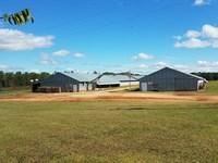 Two Breeder House Farm On 34+/- Ac : Ashford : Houston County : Alabama