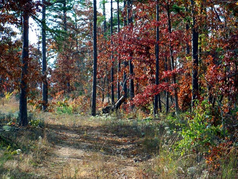 12 Acres, Clearing, National Forest : Summersville : Shannon County : Missouri