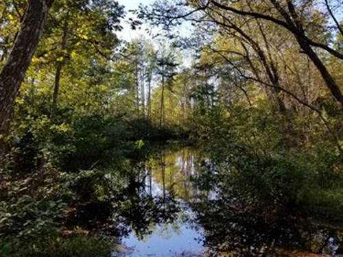 146+/- Acres In Halifax, Va : Halifax : Virginia