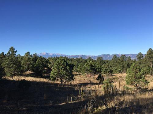 Black Forest Retreat : Colorado Springs : El Paso County : Colorado