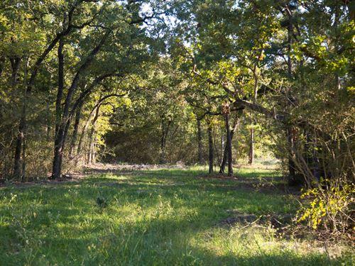 10.41 Ac Tract 7 Cedar Ridge Rd : Huntsville : Walker County : Texas
