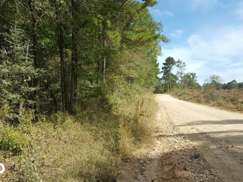 22 Acre Recreational And Hunting Pr : Moscow : Polk County : Texas