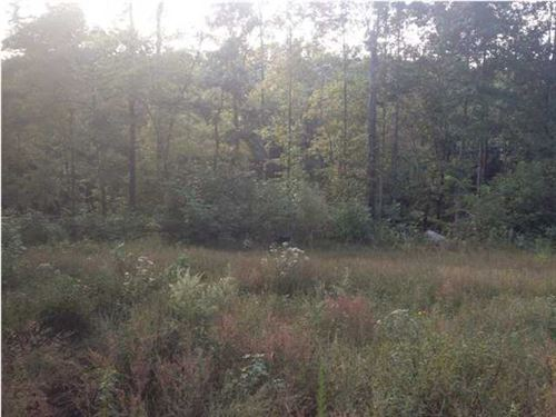 93.91+/-Acres Hunting Land : South Pittsburg : Marion County : Tennessee