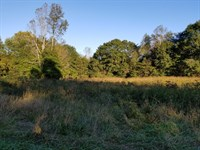 53.52+/- Acre Mixture, Woods & Farm : Whitwell : Marion County : Tennessee